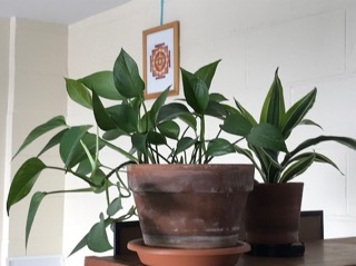 Plant in puja room